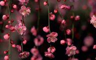 Black Flower Blossom Band 36 Background Wallpaper