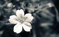 Black Flowers Amazon 25 Widescreen Wallpaper