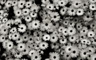 Black Flowers Lyrics 33 Cool Hd Wallpaper