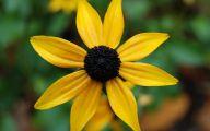 Black Flowers Names 19 Background