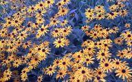 Black Flowers Names 22 Wide Wallpaper