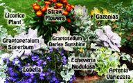 Black Flowers Names 3 Desktop Background