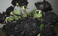 Black Rose For Sale 6 Background