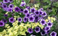 Blue Flowers Annuals 1 Widescreen Wallpaper