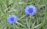 Blue Flowers Annuals 14 Wide Wallpaper