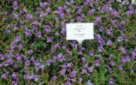 Blue Flowers Annuals 17 Free Hd Wallpaper