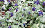 Blue Flowers Annuals 18 Free Hd Wallpaper
