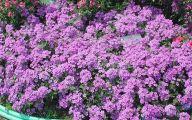 Blue Flowers Annuals 19 Widescreen Wallpaper