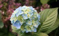 Blue Flowers Annuals 2 Desktop Background