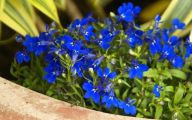 Blue Flowers Annuals 33 Background