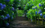 Blue Flowers Available In December 11 Desktop Wallpaper