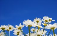 Blue Flowers Available In December 22 Cool Hd Wallpaper