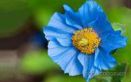 Blue Flowers Available In November 22 Desktop Wallpaper