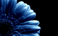 Blue Flowers Available In October 12 Hd Wallpaper