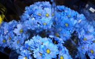 Blue Flowers Available In October 14 High Resolution Wallpaper