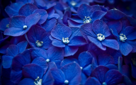 Blue Flowers Available In October 15 Background