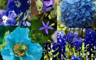 Blue Flowers Available In October 21 Free Wallpaper