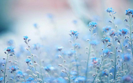Blue Flowers Available In October 30 Hd Wallpaper