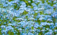 Blue Flowers Available In October 4 Desktop Wallpaper