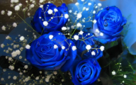 Blue Flowers Available In October 5 Free Hd Wallpaper
