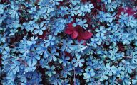 Blue Flowers Available In October 7 Background