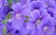 Blue Flowers Background 1 Widescreen Wallpaper