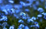 Blue Flowers Background 2 Background Wallpaper