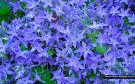 Blue Flowers Background 32 Desktop Wallpaper