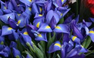 Blue Flowers By Name 1 Background