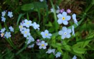 Blue Flowers By Name 2 Widescreen Wallpaper