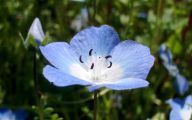 Blue Flowers By Name 3 Cool Hd Wallpaper