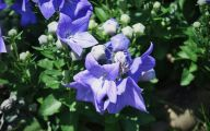 Blue Flowers By Name 5 High Resolution Wallpaper