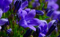 Blue Flowers By Name 6 High Resolution Wallpaper