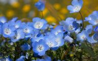 Blue Flowers By Name 9 Widescreen Wallpaper