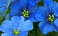 Blue Flowers California 15 Desktop Wallpaper
