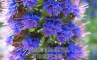 Blue Flowers California 26 Cool Wallpaper