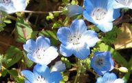Blue Flowers California 33 Cool Hd Wallpaper
