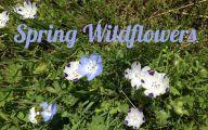 Blue Flowers California 34 Free Hd Wallpaper