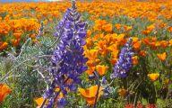Blue Flowers California 40 Widescreen Wallpaper