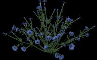 Blue Flowers Clip Art 26 High Resolution Wallpaper