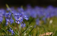 Blue Flowers Delivery 34 Cool Hd Wallpaper