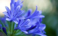Blue Flowers Dr Octagon 25 Free Hd Wallpaper