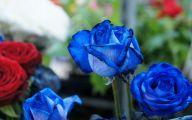 Blue Flowers Dr Octagon 5 Cool Hd Wallpaper