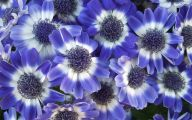 Blue Flowers Kool Keith 9 Wide Wallpaper