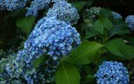 Blue Flowers List 1 High Resolution Wallpaper
