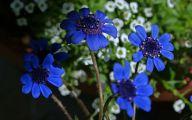 Blue Flowers List 10 Wide Wallpaper