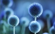 Blue Flowers List 16 Cool Hd Wallpaper