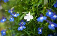 Blue Flowers List 8 Background Wallpaper