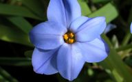 Blue Flowers Names 101 Wide Wallpaper
