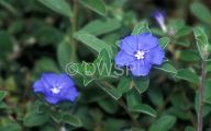 Blue Flowers Names 103 Cool Hd Wallpaper